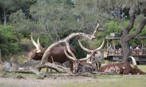 le parc accueille quelques nouveaux arrivants dans betty and the beast