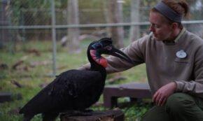 un habitat peut recruter un nouveau resident dans meet the mandrills